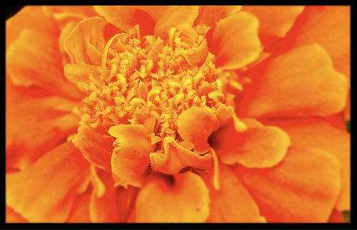 """Orange Delight"" by Anil Jadhav"