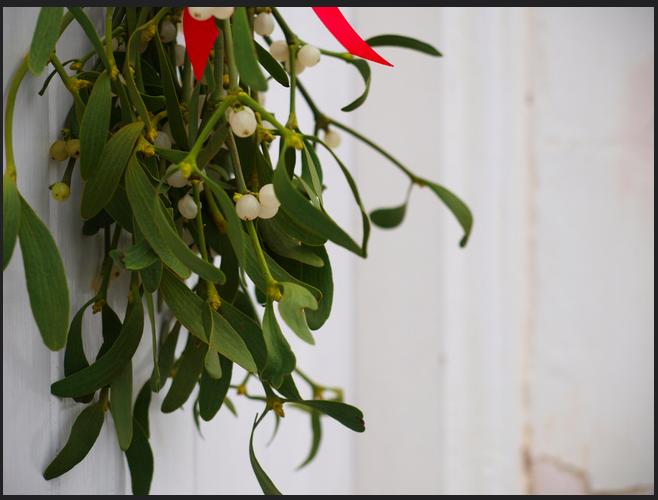 Mistletoe by Paula Bailey